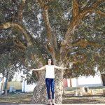 Árvores seculares para atrair ecoturismo